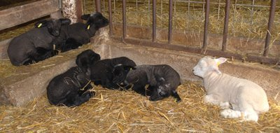 Wally, Winola, Winona, Winter and friends in the first mixing pen
