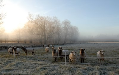 Ulmer and his girls on a frosty morning