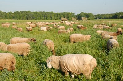 """Grazing in """"the Orchard"""""""