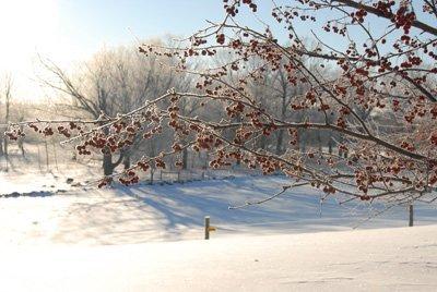 Winter scene at the farm