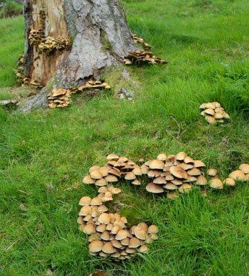 Mushrooms growning near Dollerup