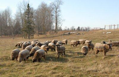 """grazing"" in January"