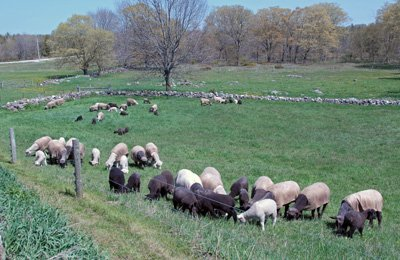 first day on pasture in 2012