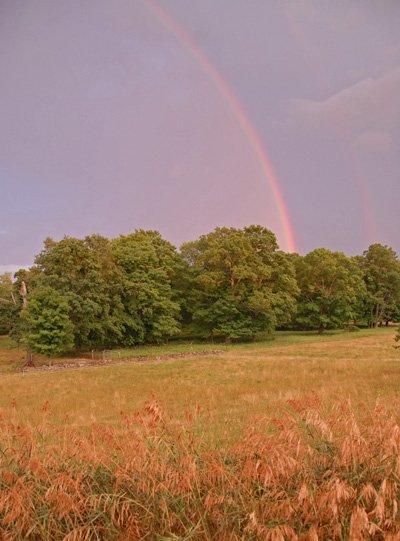 Wonderful rain on dry pastures