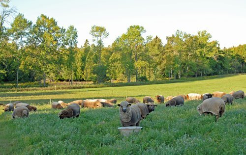 Yo Yo Baah and the rest of my buddies in the early morning at the end of the earth
