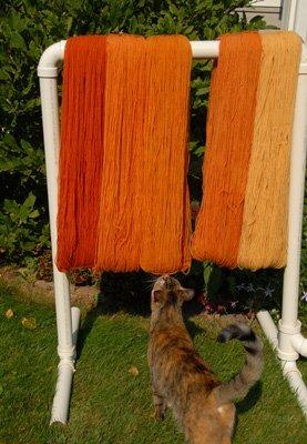 Pussa inspecting dye job