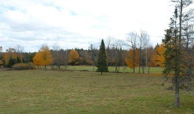 Maples Nov 2013