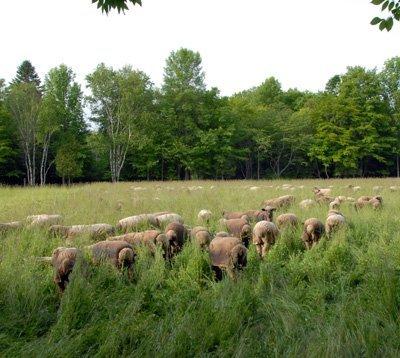 Shoulder deep in pasture