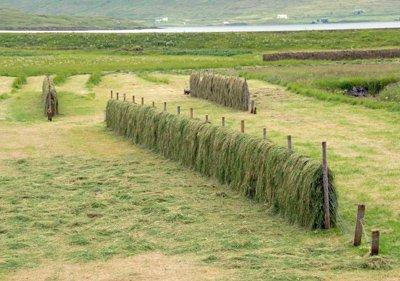 Drying hay