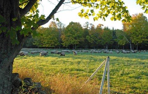 FAll grazing in #3