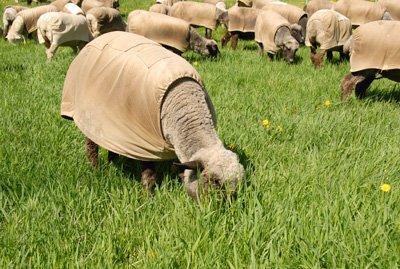 Good green gras to graze
