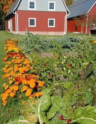 Veggies in October