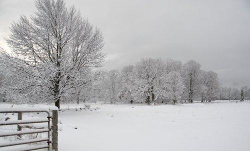 Snow on pasture #1