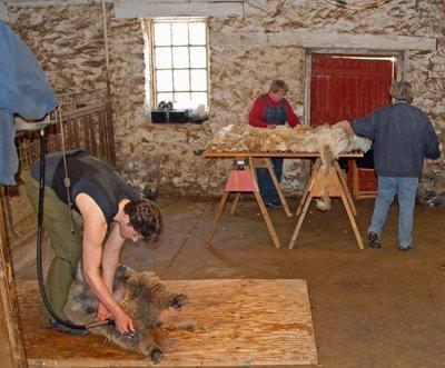 Shearing & Skirting