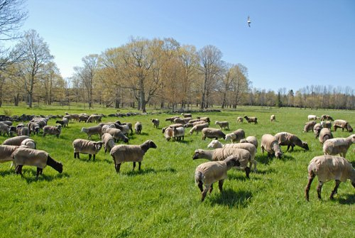 On pasture May 18th