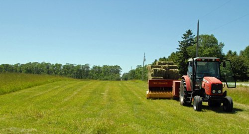 Haying in late June