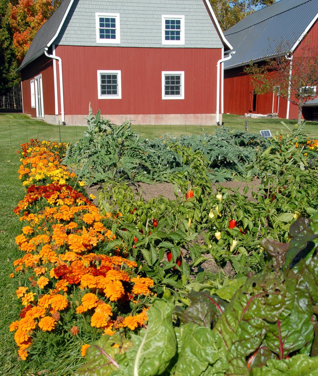 View of the gallery from the vegetable garden
