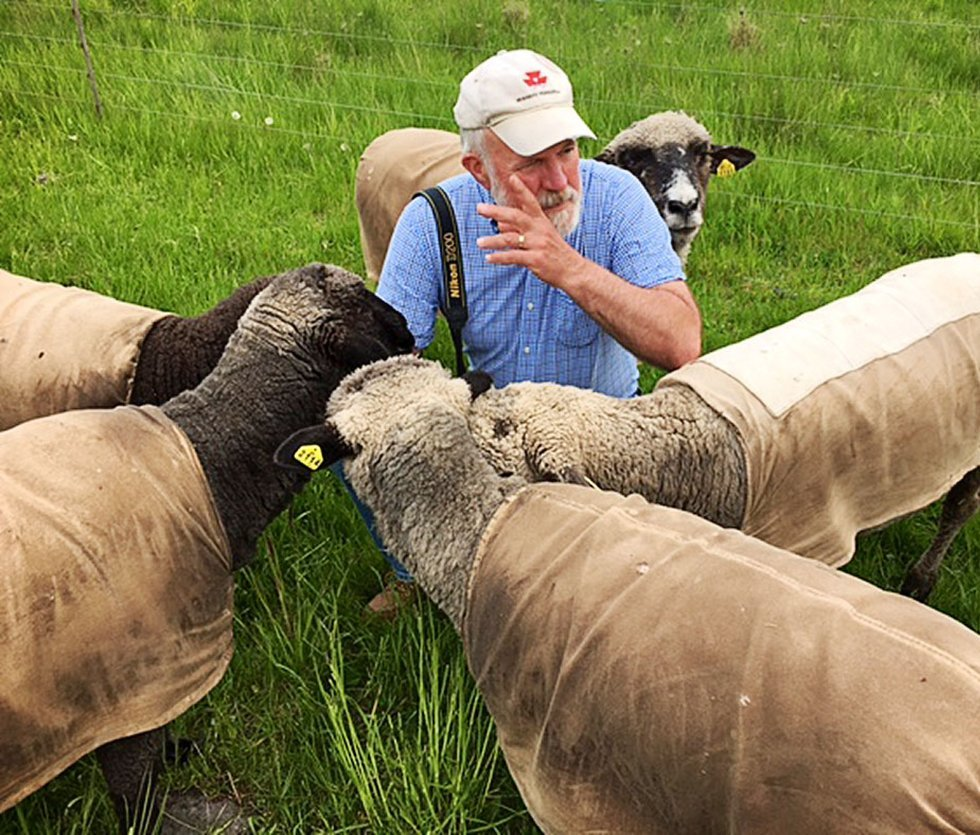Sheep Album ewe council