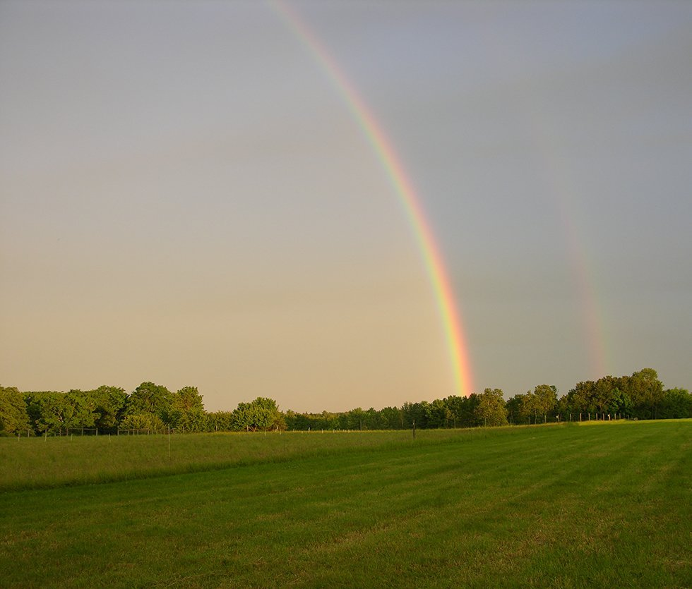 Rainbows over pastures