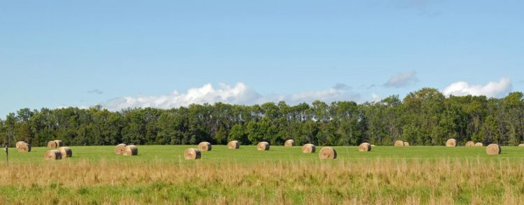 Round Bales on our large hay field