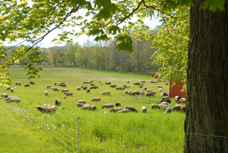 Road Pasture in Spring 2009