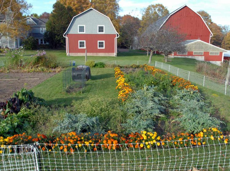 Garden in late October