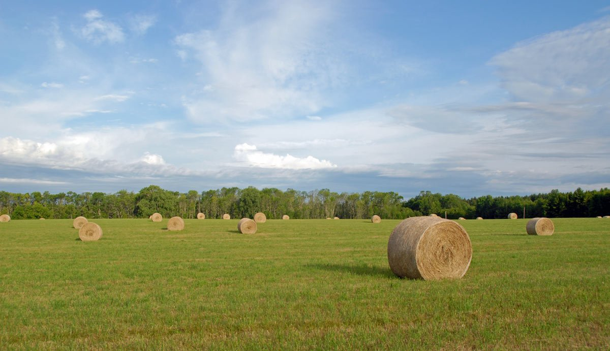 Round bales on the big field